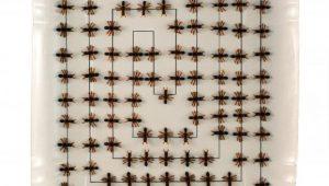 Divulgação/Museu Afro Brasil