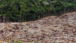 Crise da Amazônia repercurte na imprensa internacional