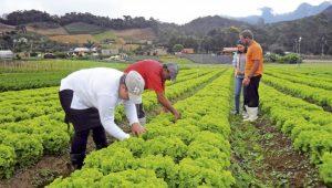 Ruralistas tentam avançar com projeto que flexibiliza regras de agrotóxicos