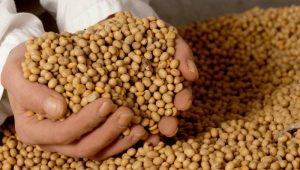 Soja pode ser alternativa para dietas restritivas em proteínas de origem animal
