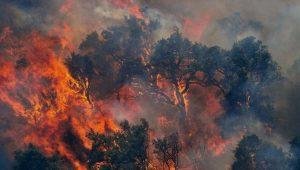 Câmera possibilita ver em 360° uma floresta sendo incendiada; confira