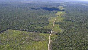 Governo precisa de ação concreta de fiscalização na Amazônia, diz deputado