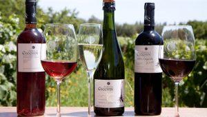 O vinho natural Argentino é melhor que o Chileno? É sim! Conheça as opções