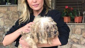 Luisa Mell resgata 135 cães de canil em Osasco