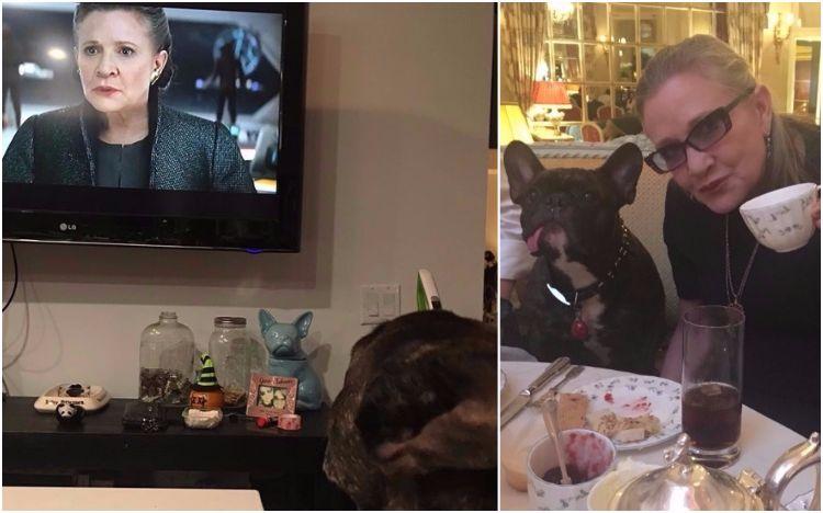 "Cachorro de Carrie Fisher assiste trailer de ""Star Wars"""