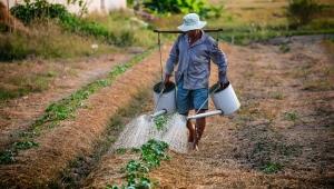 Valor bruto de produção agropecuária deve cair 1,91% em 2018