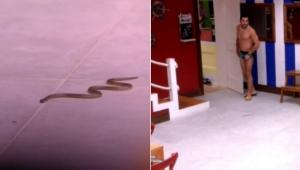 BBB 18: Cobra aparece na cozinha da casa e assusta Kaysar e Wagner