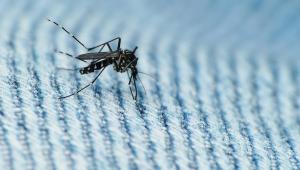 Cientistas criam método mais barato e efetivo para detectar mosquito com zika