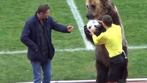 Mais um dia normal na Rússia? Urso entra em campo, pede palmas e entrega bola a juiz