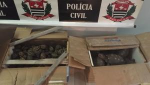 Polícia apreende mais de 200 animais entre tartarugas, gaviões e iguanas em ônibus em SP