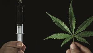 Anvisa adia mais uma vez decisão sobre maconha medicinal