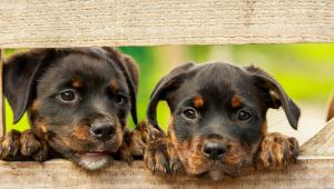 Campanha de vacinação contra raiva para cães e gatos começa no dia 21 em SP