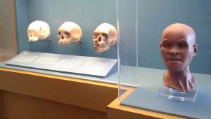 Diretor do Museu Nacional comemora resgate de Luzia: 'poderemos restaurá-la praticamente 100%'