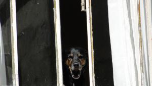 Senado deve discutir nesta terça (11) lei que endurece penas por maus-tratos a animais