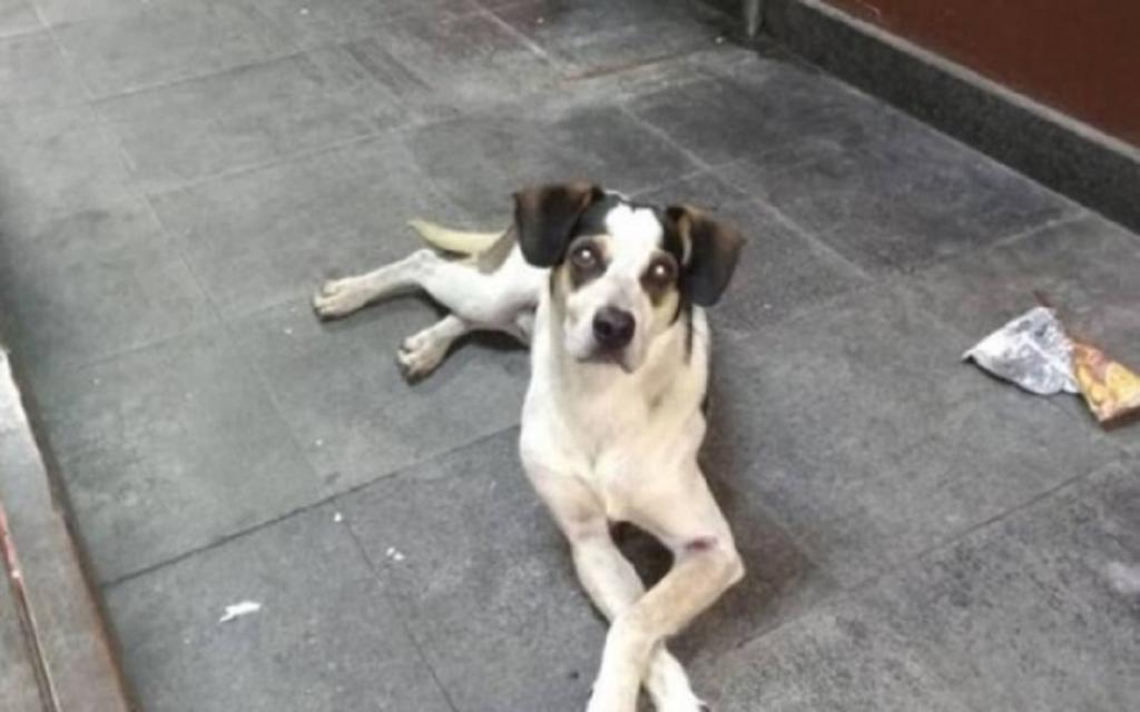 MP abre inquérito para apurar morte de cão em supermercado
