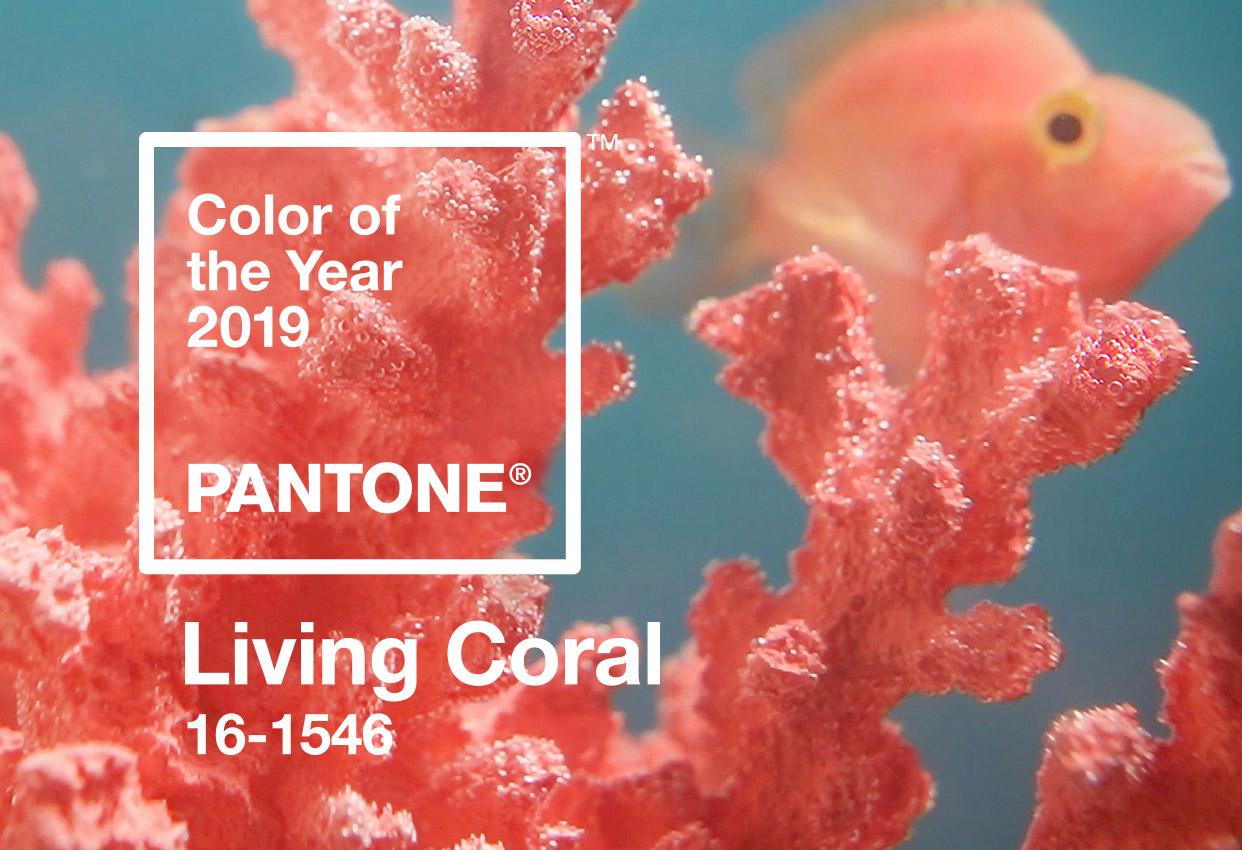 Resultado de imagem para pantone coral living