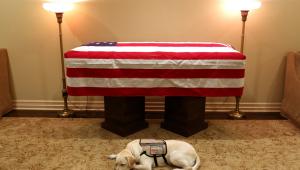 O labrador Sully, que acompanhou o ex-presidente dos Estados Unidos George H.W. Bush nos últimos sete meses, foi fotografado deitado ao lado de seu caixão no último domingo (2)