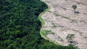 Cúpula do governo critica pressão internacional para preservar 'todas as florestas' brasileiras