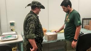 Ibama apreende 8 cobras enviadas pelos Correios para o interior de SP