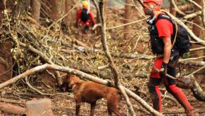 Brumadinho: Total de mortos continua em 166; ainda há 144 desaparecidos