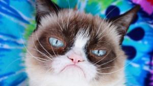 Morre Grumpy Cat, a gatinha de cara fechada mais famosa do mundo