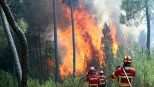 Portugal controla parcialmente incêndios florestais e prende suspeito