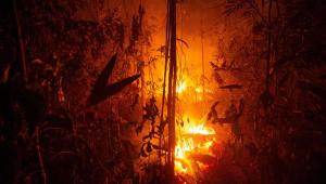 FAB disponibiliza duas aeronaves para combate a incêndios na Amazônia