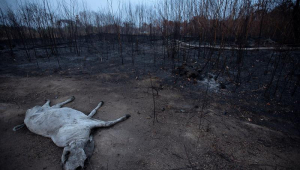 Quatro estados terão auxílio das Forças Armadas para combate a incêndios na Amazônia