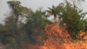 'Amazônia é o pulmão verde do planeta', diz papa Francisco ao pedir orações para o Brasil