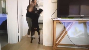 Polícia investiga youtuber que bateu e cuspiu em cachorro em vídeo publicado sem edição