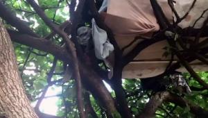 'Tarzan' carioca é descoberto pela Prefeitura do RJ na Lagoa