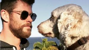 Final feliz! Chris Hemsworth encontra Sunny, seu cãozinho que fugiu