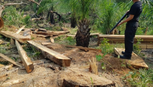 operacao-combate-desmatamento-no-ms