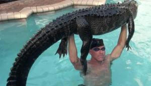 Homem resgata jacaré de 90 kg de piscina nos EUA: 'O mais suave possível'